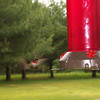 <b>Submitted By:</b> nancy Miela <b>From:</b> Fife lake <b>Description:</b> Hummingbird in flight at feeder.