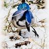 <b>Submitted By:</b> Peggy Sue Zinn <b>From:</b> Traverse City <b>Description:</b> Blue Bird Boogie