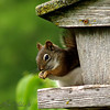 <b>Submitted By:</b> Randal S Hart <b>From:</b> traverse city <b>Description:</b> squirrel in my feeder...