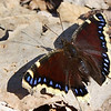 <b>Submitted By:</b> Vanessa R. Chavez <b>From:</b> Traverse City, MI <b>Description:</b> Butterfly/Moth