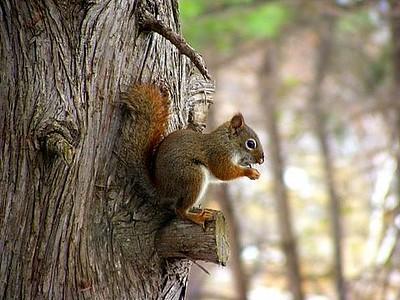 Baby squirrel @ the feeders, Silver Lake:)<br /> <br /> Susan Anderson, Traverse City