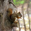 Baby squirrel @ the feeders, Silver Lake:)<br /> <br /> Susan Anderson, Traverse City