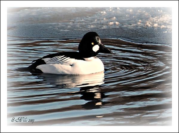 <b>Submitted By:</b> Susan Niles <b>From:</b> Traverse City, MI <b>Description:</b> Taken on the Boardman River, Traverse City, MI