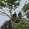 10 05 2013 Eagles on M-22, West Bay, Bingham Twp. - 110 - Version 2