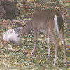 <b>Submitted By:</b> Jackie Simmons <b>From:</b> Hersey Mi <b>Description:</b> Cat and Deer.