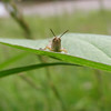 <b>Submitted By:</b> Jacob Pszczolkowski <b>From:</b> Traverse City <b>Description:</b> I used my mom's camera to take this picture of a grasshopper. Jacob - age 8