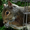 <b>Submitted By:</b> Paul J Nepote <b>From:</b> Traverse City <b>Description:</b> It's a Bird Feeder