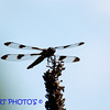 <b>Submitted By:</b> Randal  Hart <b>From:</b> traverse city <b>Description:</b> dragon fly