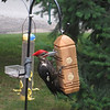 <b>Submitted By:</b> Ruth Ring <b>From:</b> Traverse City <b>Description:</b> Pileated woodpecker on suet feeder. Taken in West side of Traverse City on 23 July 2010.