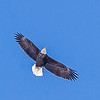 Flight of Eagle<br /> <br /> Photographer's Name: Peggy Sue  ZINN<br /> Photographer's City and State: Traverse City, MI