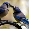 <b>Submitted By:</b> Paul J Nepote <b>From:</b> Traverse City <b>Description:</b> Feeding the Baby