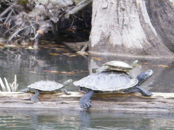 <b>Submitted By:</b> Pam Yetter <b>From:</b> kingsley <b>Description:</b> manistee river 09'