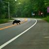 <b>Submitted By:</b> Sean Nowicki <b>From:</b> Traverse City <b>Description:</b> A bear crossing the road at Interlochen School.