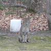 <b>Submitted By:</b> Sue Jones <b>From:</b> Grand Traverse County <b>Description:</b> Waiting and watching.