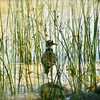 <b>Submitted By:</b> Roya Tremp <b>From:</b> Traverse City, MI <b>Description:</b> Bird through the grass at the waterfront