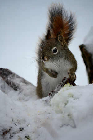 <b>Submitted By:</b> Myongsoon Cho <b>From:</b> Traverse City <b>Description:</b> December21,2012 Searching for more food.