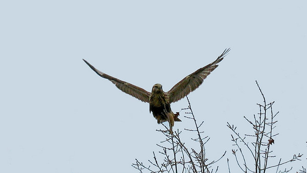 Mitchell Creek Hawk Paul Nepote, Traverse City Canon PowerShot A630 ab315@tcnet.org