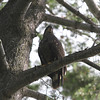 "<b>Submitted By:</b> VB <b>From:</b> Traverse City <b>Description:</b> This ""baby"" eagle has decided to hang out along the shores of east bay."
