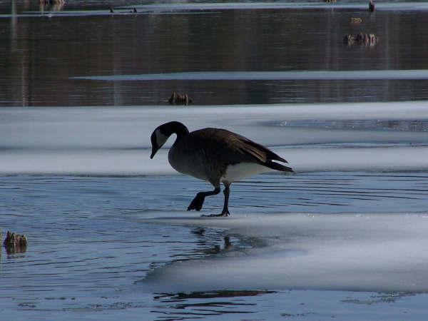 One last step.<br /> Elk Lake, Mar. '09<br /> Mark Miller