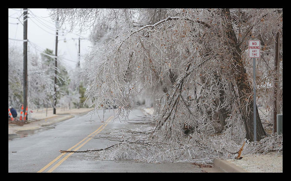 Trees sag and break under the weight of the ice on E brooks Ave near 12th Ave Se in Norman<br /> <br /> Photographer's Name: Bill Noesges<br /> Photographer's City and State: Norman, OK