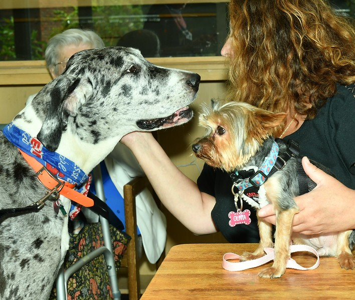Fiona, a 9 year old Great Dane and her best friend, Olivia who is a Yorkshire Terrier. the dogs were at the Reading to the Animals event at the Fitchburg Library on Saturday.<br /> Sentinel & Enterprise / Jim Fay
