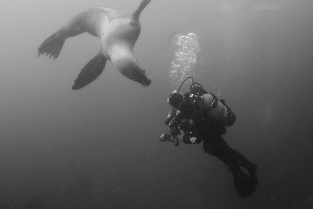 Diver Dancing with Sea Lion