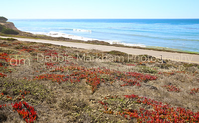 Beach House at Centrally Grown_Cambria_Ca_House for Rent-7256
