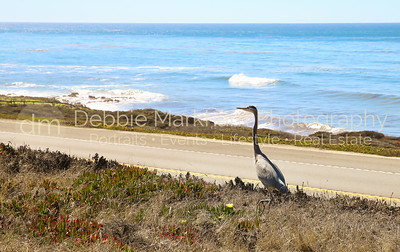 Beach House at Centrally Grown_Cambria_Ca_House for Rent-7266