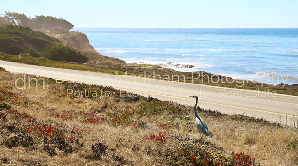 Beach House at Centrally Grown_Cambria_Ca_House for Rent-7264