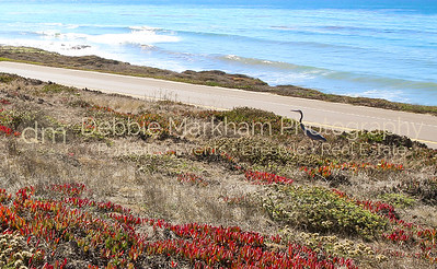 Beach House at Centrally Grown_Cambria_Ca_House for Rent-7258
