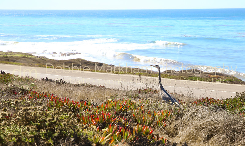 Beach House at Centrally Grown_Cambria_Ca_House for Rent-7260