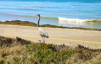 Beach House at Centrally Grown_Cambria_Ca_House for Rent-7268