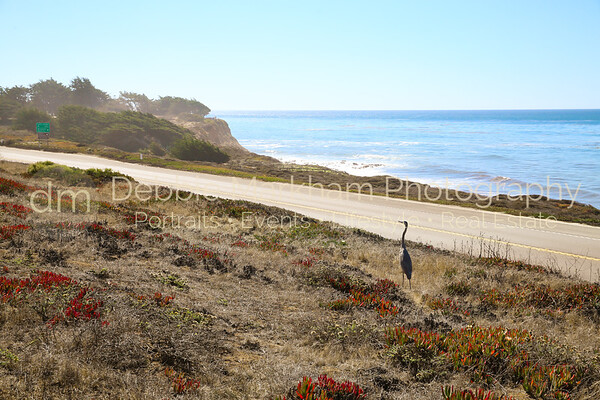 Beach House at Centrally Grown_Cambria_Ca_House for Rent-7262