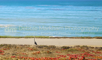 Beach House at Centrally Grown_Cambria_Ca_House for Rent-7254