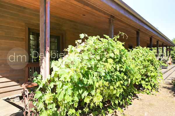 Red Mountatin_Cambria_Ca_House for Rent-7571