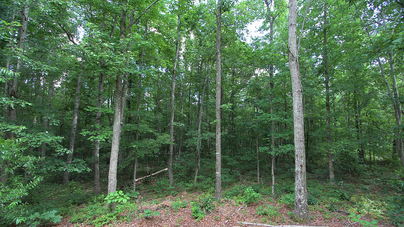 View of Wooded Acreage