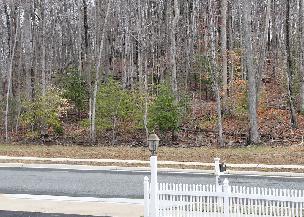View from front door of common wooded area across the street.