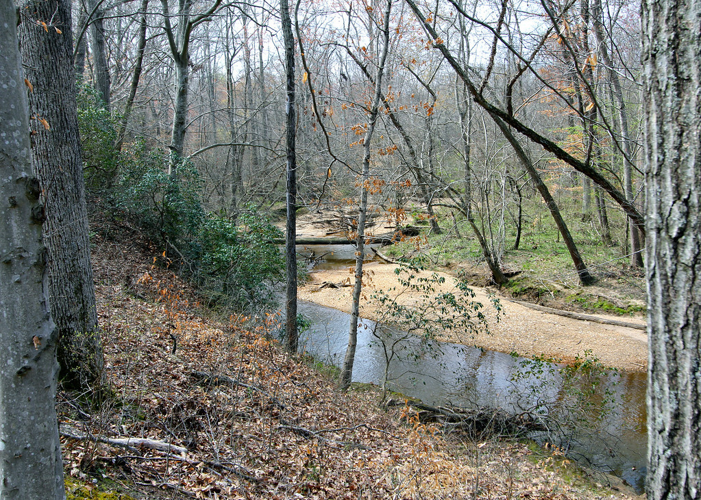View of stream that runs along the edge of the back acreage.