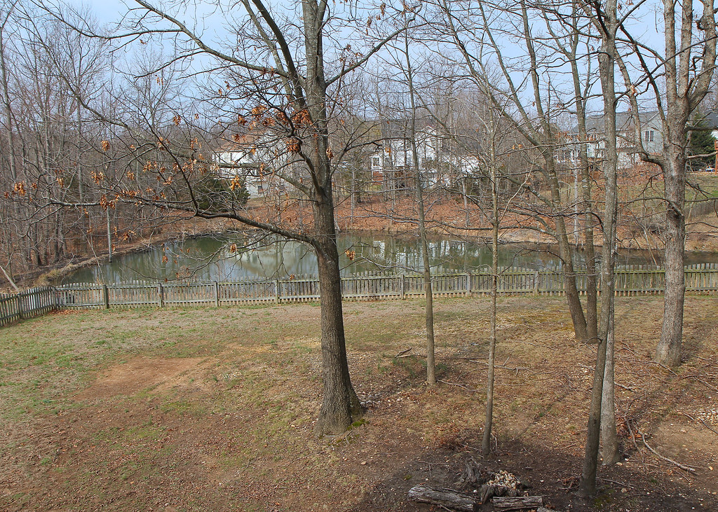 Back yard and pond view from kitchen