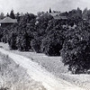 I'm not sure, but I think the cupola that you see on the left side is on the barn and carriage house for the Hilton Ave home (North of Hilton). Charles had his wood working shop in there as well as his tools to tend to his orange grove.  Charles, like many of the other orange growers, lost his grove do to the big freeze of 1913.  Not only did he loose his crop, he lost his trees.