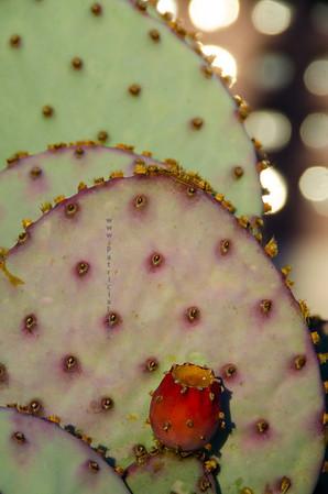 cactus red bud  new bldg 410