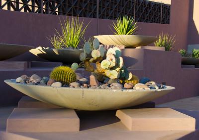 ASU cactus planter 405