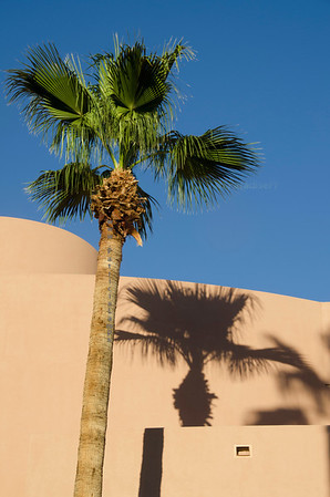 Palm tree and shadow 3401
