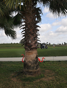 we talked to our cousins in California and heard that the Carliles' will be chasing those little white balls on the course behind us. We have great seats to watch them...