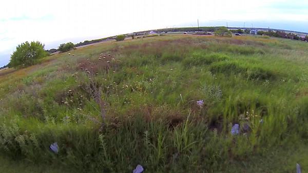 pfluger field