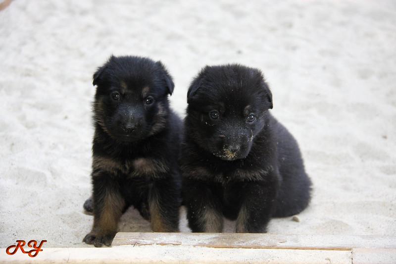 pups-097