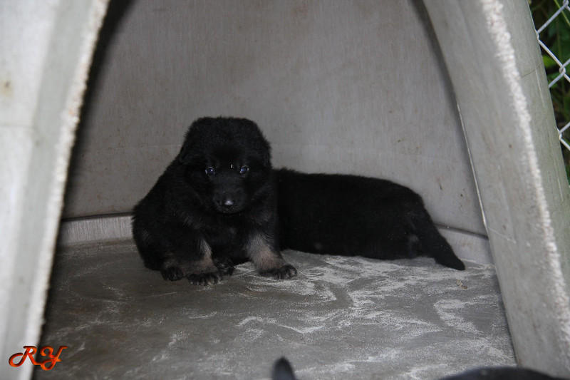 pups-100