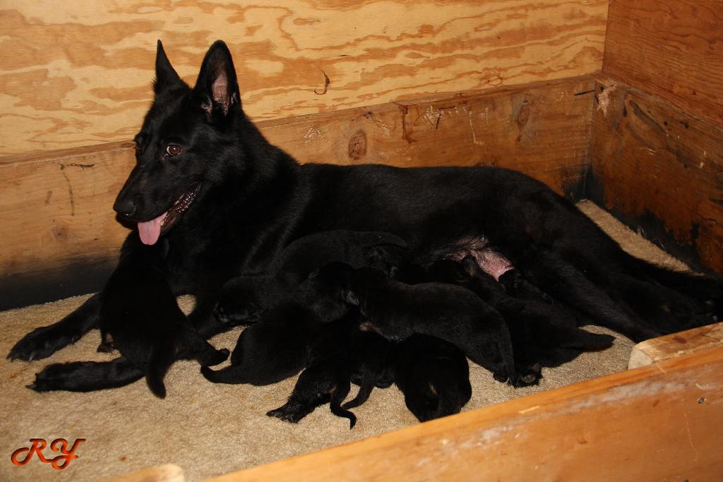 8/15/09<br /> 2 weeks old