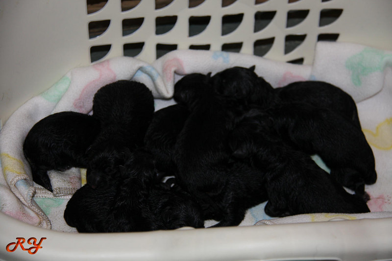 1/8/09<br /> Basket full of puppies!