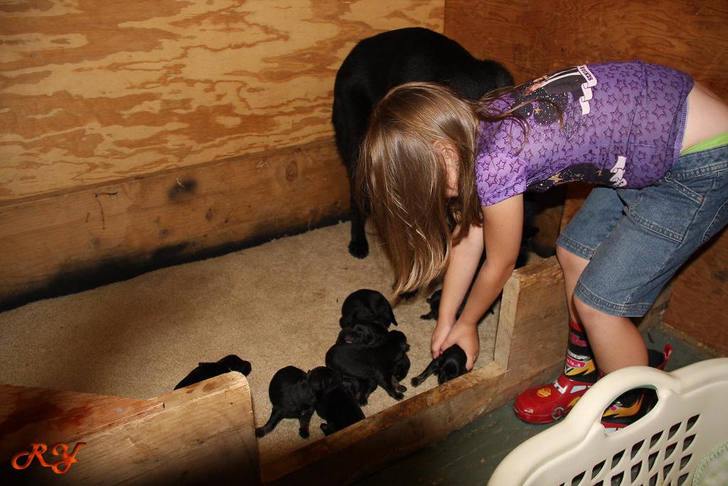 8/4/09<br /> My little helper
